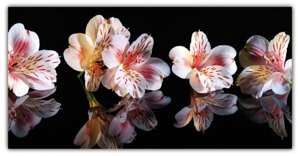 Blütenwunder Spritzschutz 100x50