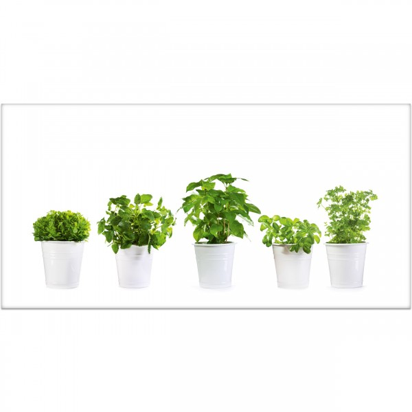 """Küchenrückwand """"Grünpflanzen eingetopft"""" - Spritzschutz mit Motiv aus Aluverbund"""