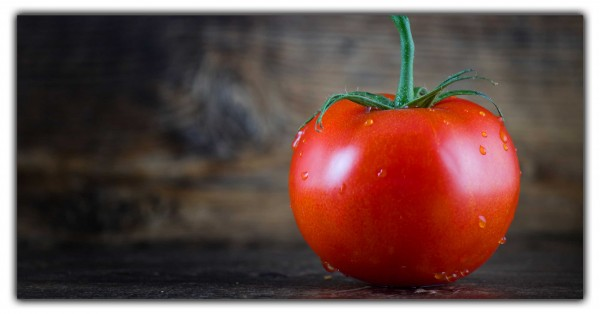 Küchenrückwand Tomate
