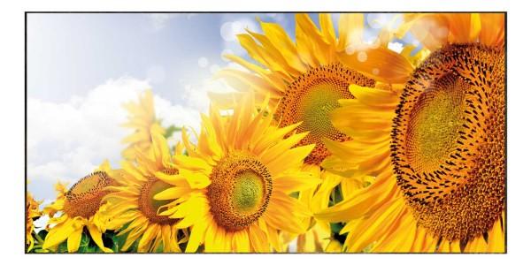 Spritzschutz Sonnenblume