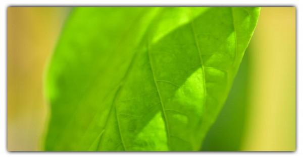 Spritzschutz Grünes Blatt