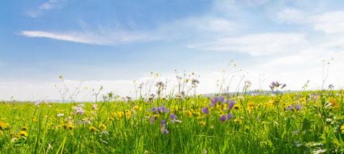 Blumenwiese Spritzschutz auf Aluverbund